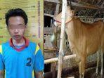 https://seputarmadura.com/wp-content/uploads/2020/07/Pemuda-di-Sumenep-Jadi-Pencuri-Sapi.jpg